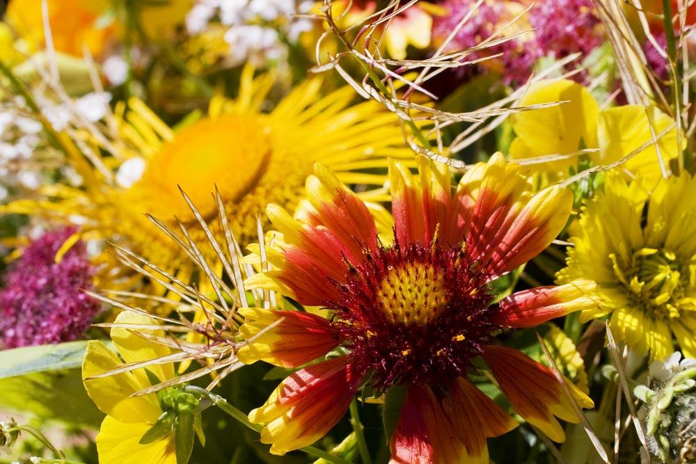 Blumensträuße im Garten pflücken