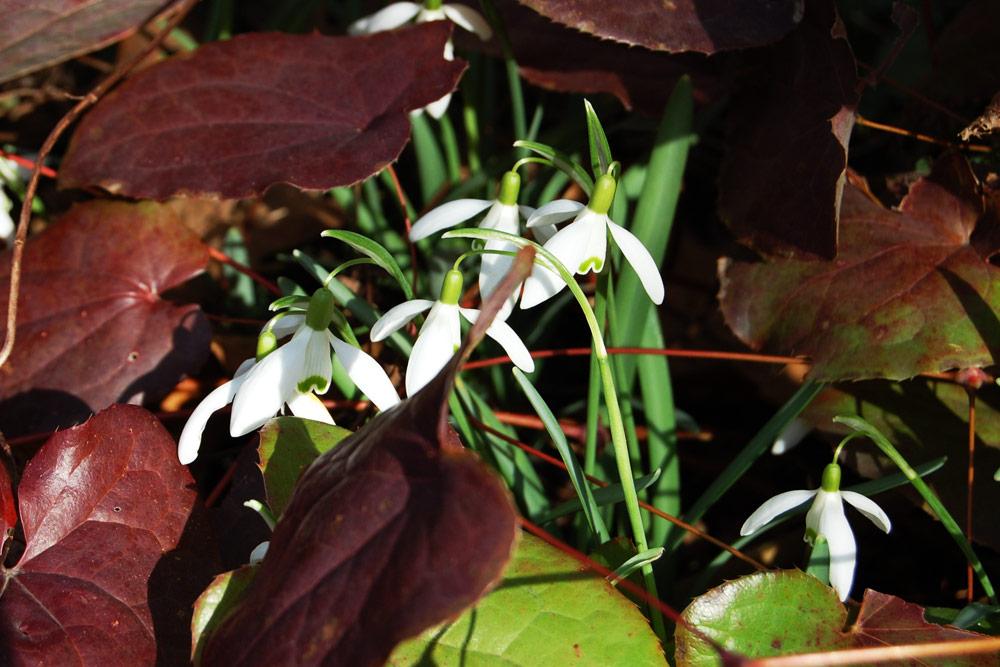 Geophyten vom Frühling bis in den Winter